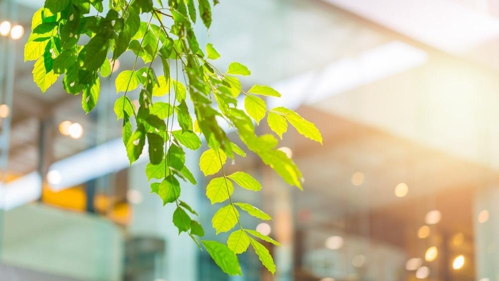 Slik kan Facility Management bidra til din bedrifts miljøprofil